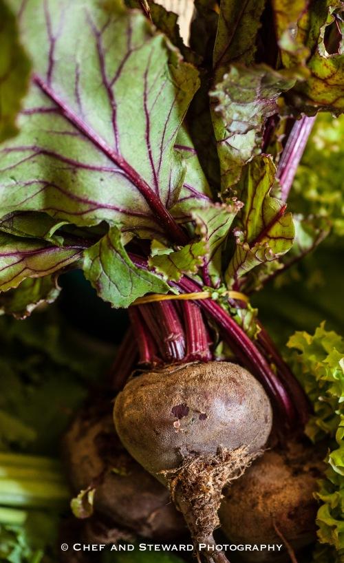 Organic Food in Dubai and UAE-4
